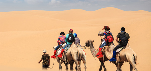 Camel Ride Mongolia Tour