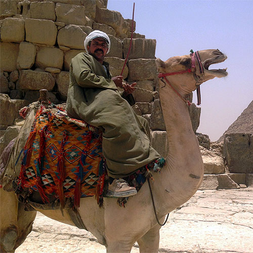 Camel Rider Egypt Tour