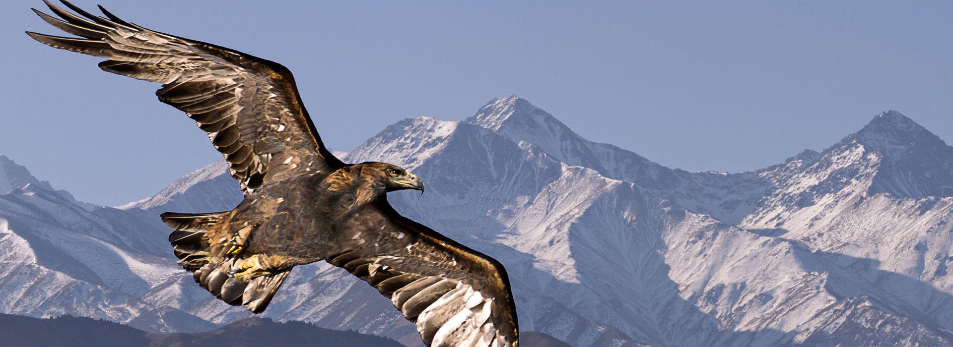 Golden Eagle Kyrgyzstan Tour