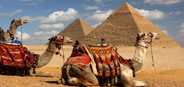 Great Pyramid Camels